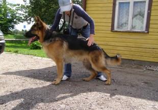 Schio 2011 07 (3)