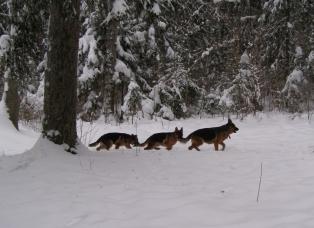 Pirma vada: pasivaikščiojimas miške