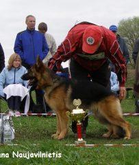 Vokiečių aviganių veislynas Šiauliuose parduoda šuniukus