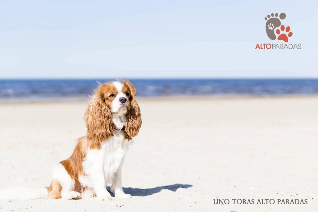 Šunų katarakta – ar galima išvengti?